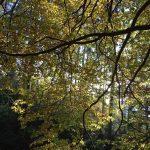 Zlaté listy podzimu