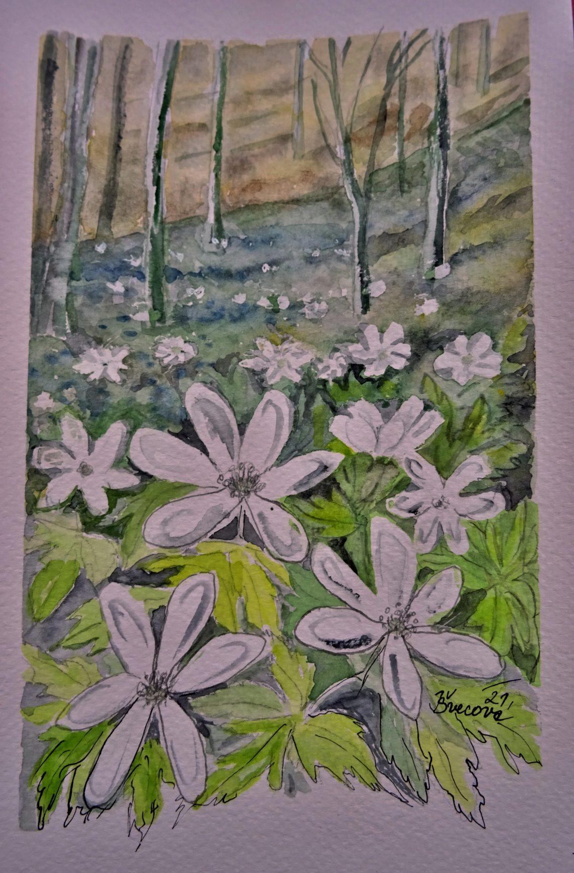 Sasanky v lese